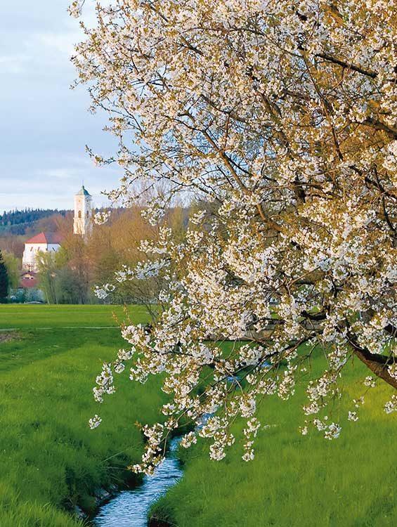 Bad-Birnbach-Bachlauf-Fruehling