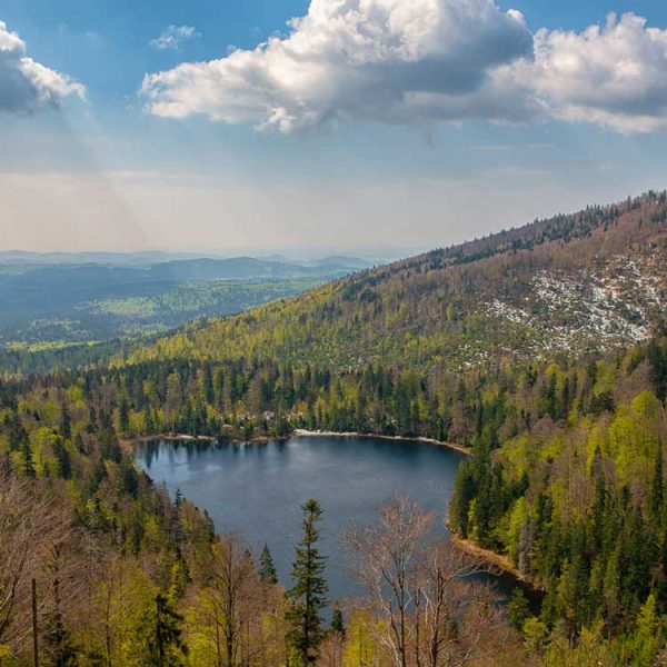 Bayrischer-Wald