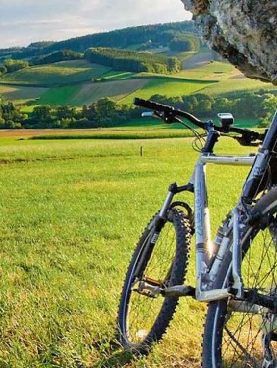 Fahrrad-auf-einer-Wiese