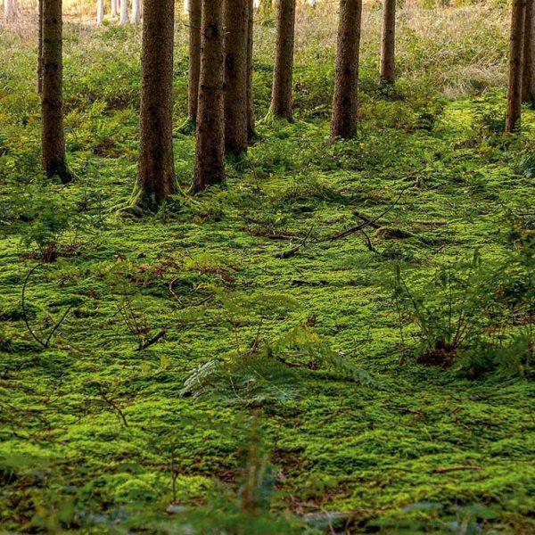 Klimapfad-Waldbaden