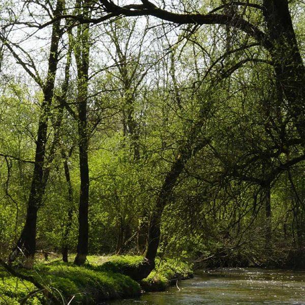 Naturlehrpfad-in-den-Rottauen