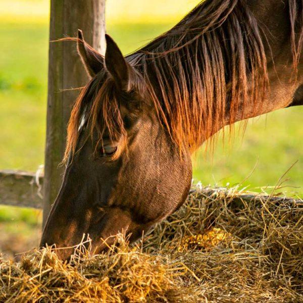 Reiten-Pferd
