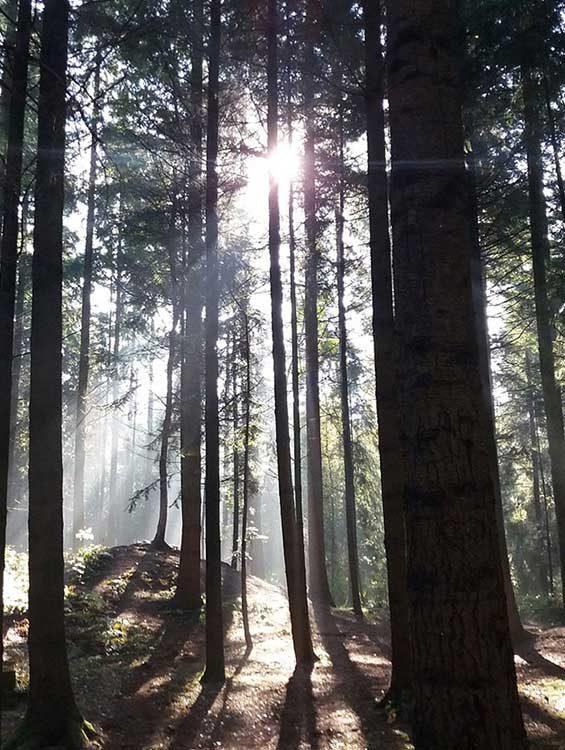 waldbaden-wood